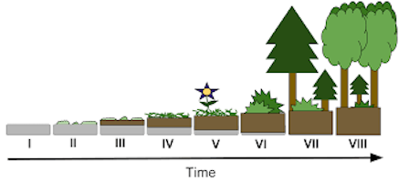 Timeline of tree growth