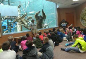 Orangutan at zoo