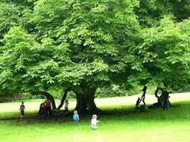 Children playing under tree
